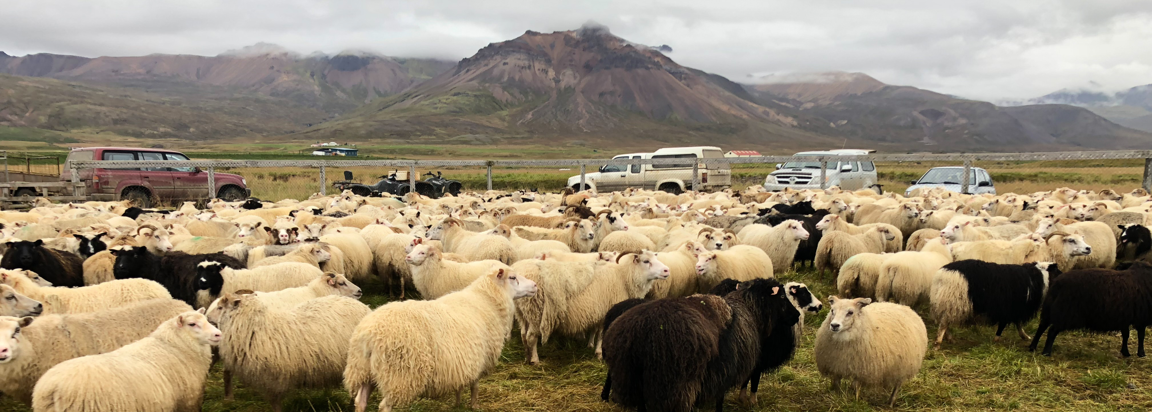 3 Day Tour – Sheep Gathering and Local Living